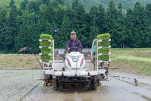 「北魚沼の旬米コシヒカリ」の田植えが始まりました。