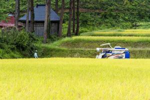 『北魚沼産コシヒカリ』の稲刈りをはじめました。